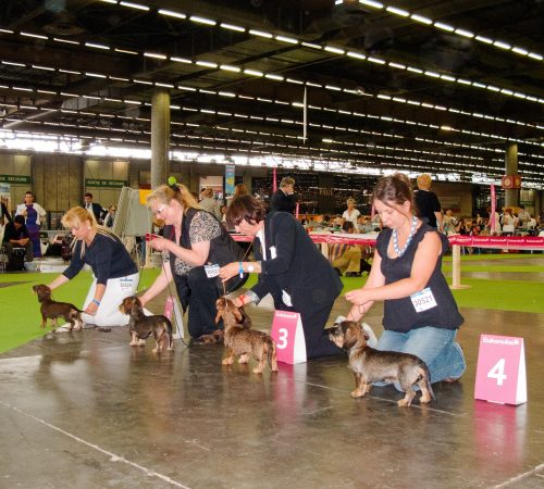 Paris 11' World Dog Show